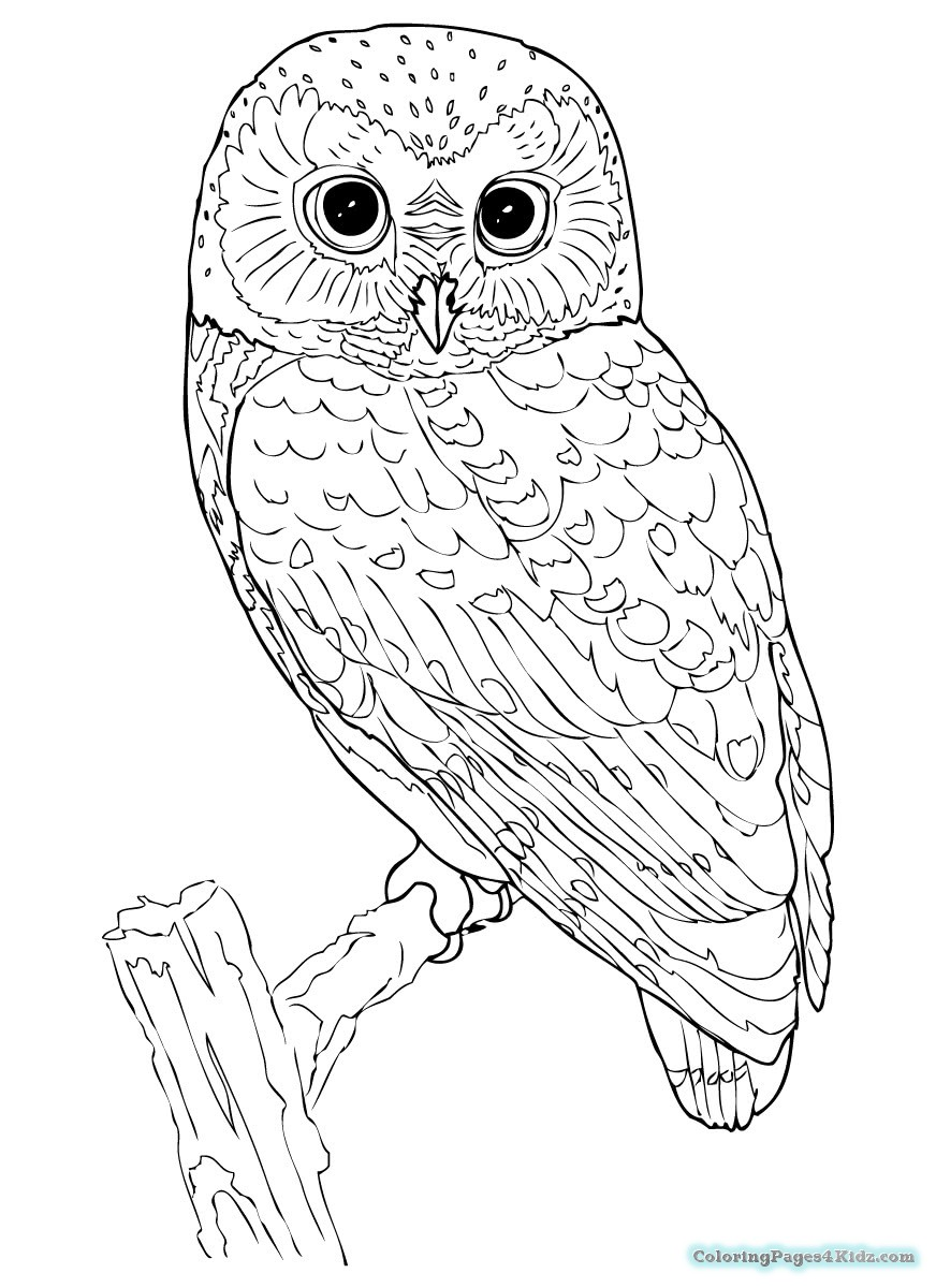 owl coloring pics adult owl coloring page coloring pages for kids pics owl coloring