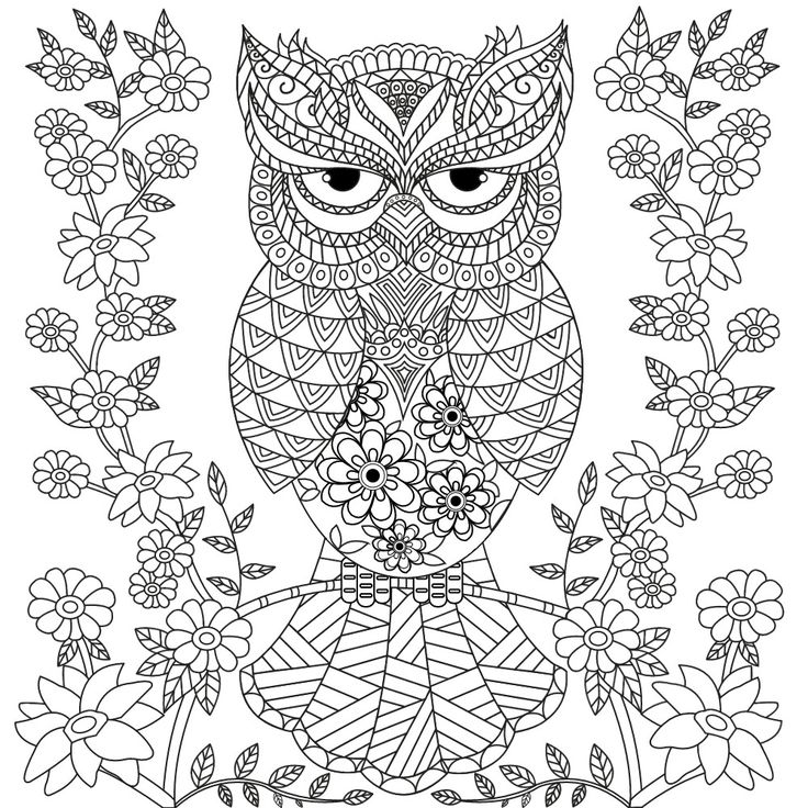 owl colouring cute owls coloring pages coloring home colouring owl
