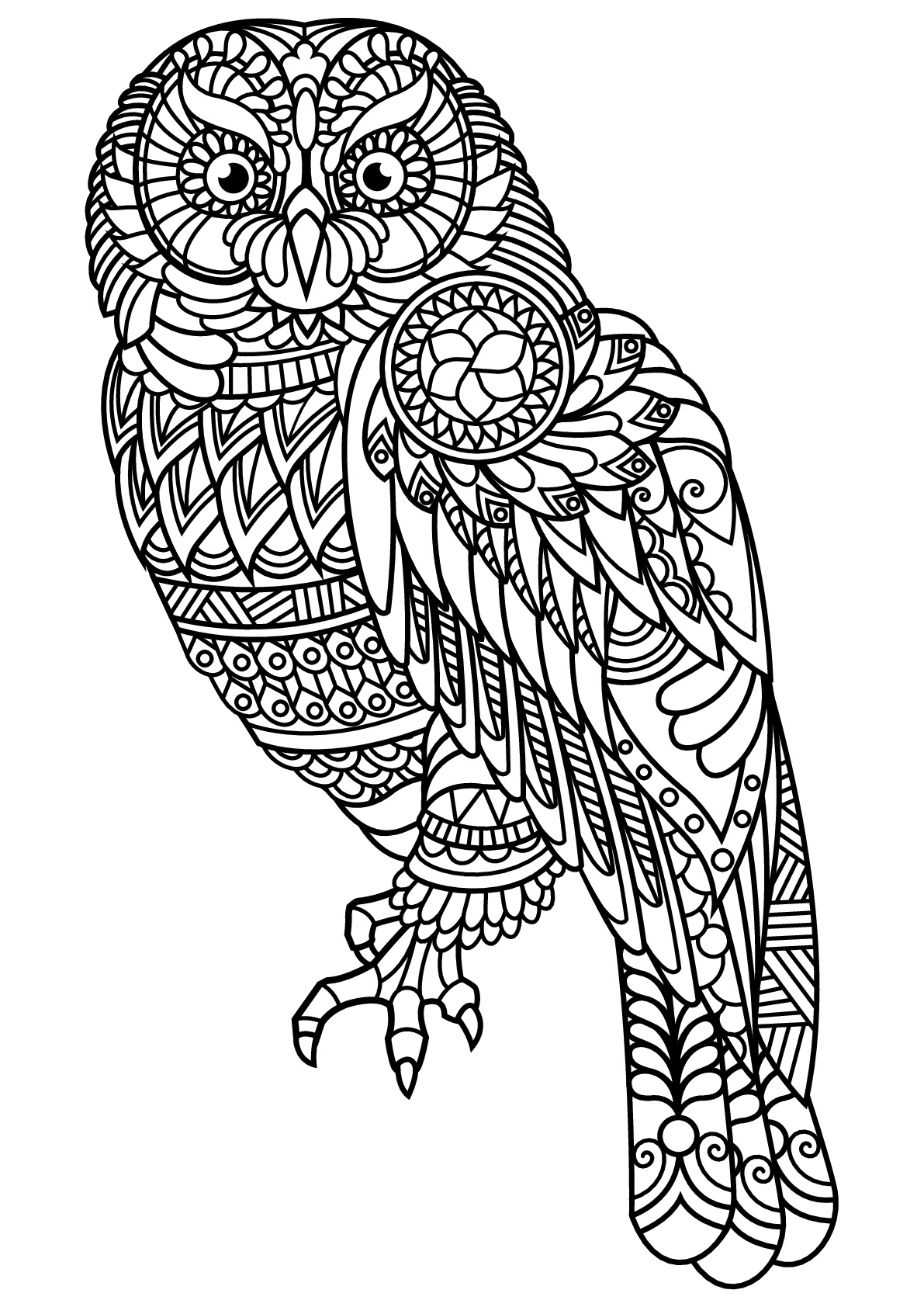 owl colouring owl coloring pages for adults free detailed owl coloring colouring owl 1 3