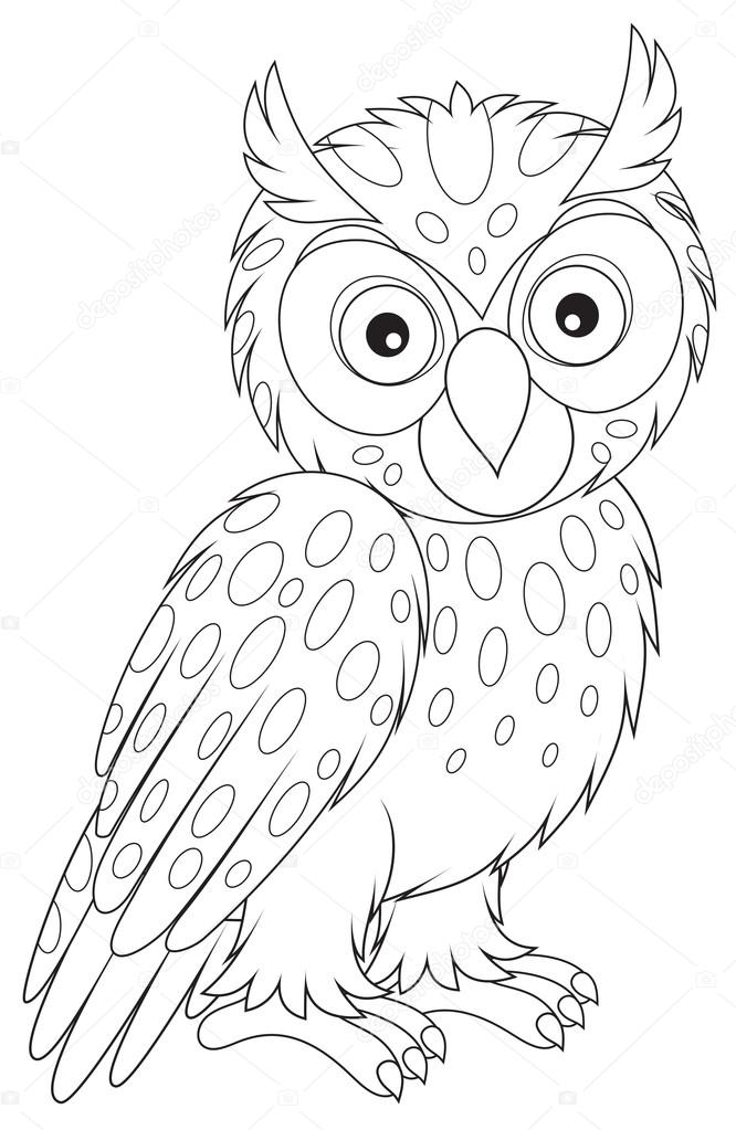 owl images to color bird coloring pages to color owl images