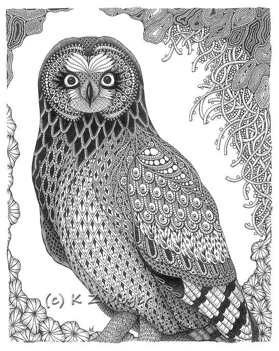 owl images to color print download owl coloring pages for your kids owl to color images