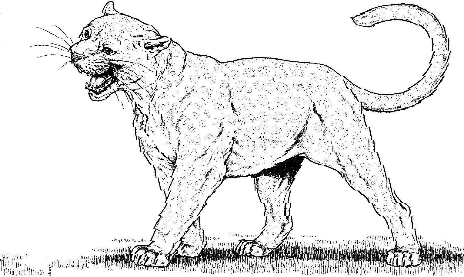 panther coloring pages black panther coloring pages best coloring pages for kids pages panther coloring