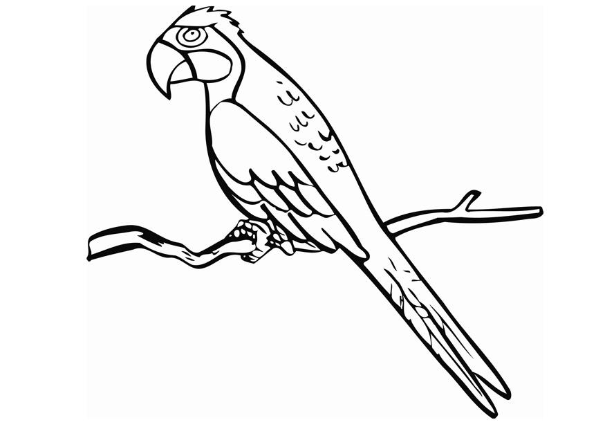 parrot to colour birds parrot3 animals coloring pages coloring book colour to parrot