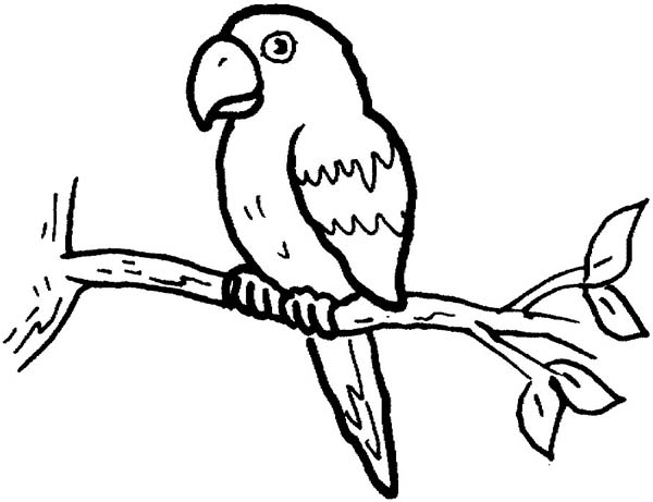 parrot to colour free parrot coloring pages for adults printable to parrot to colour
