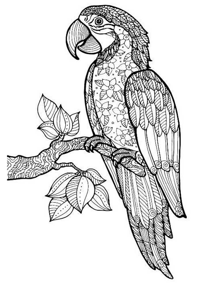 parrot to colour free printable parrot coloring pages for kids animal place colour parrot to