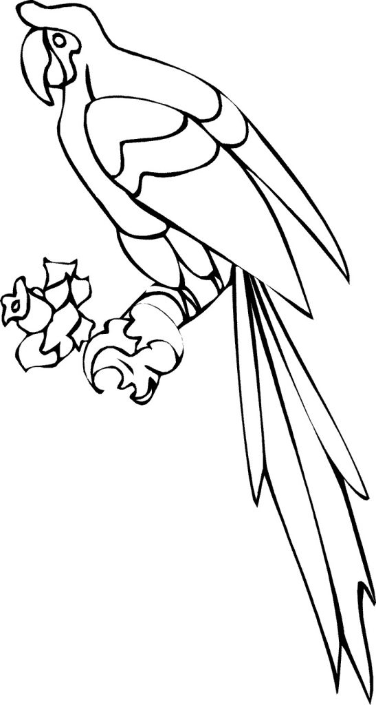 parrot to colour free printable parrot coloring pages for kids animal place colour to parrot