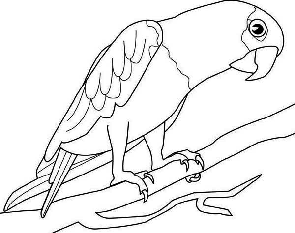 parrot to colour free printable parrot coloring pages for kids parrot colour to 1 1