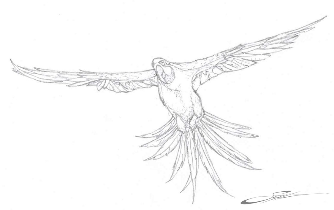 parrot to colour get this printable baby animal coloring pages online 64038 colour to parrot