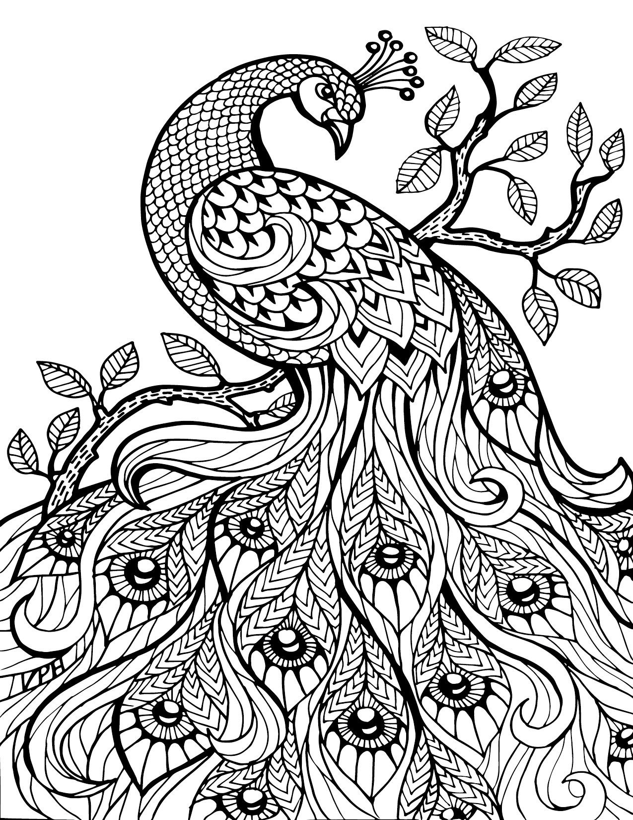 peacock coloring pages for adults adult coloring pages peacock 17274jpg 12751650 pixels pages coloring adults for peacock