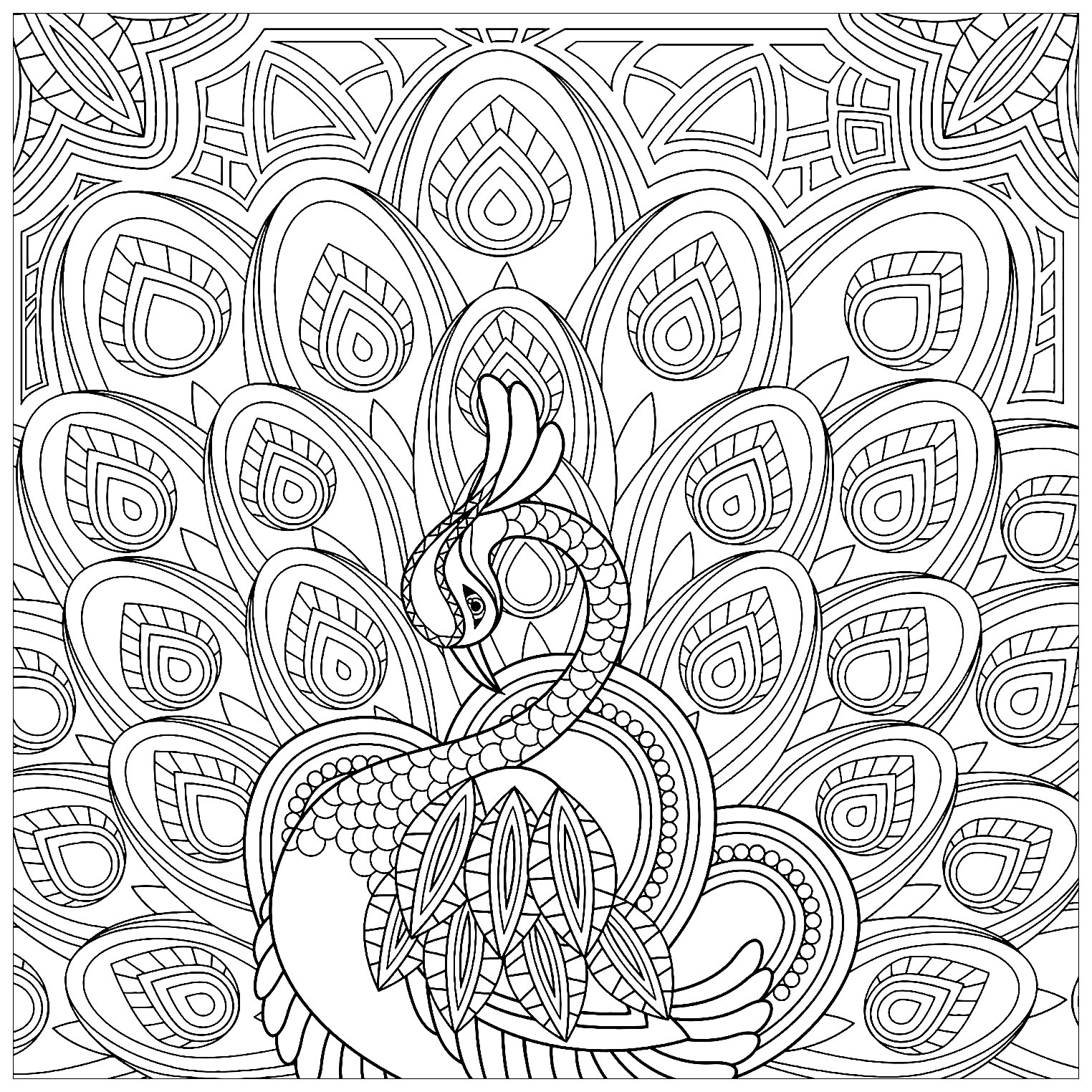 peacock coloring pages for adults elegant peacock and its blue feathers peacocks adult for coloring adults pages peacock