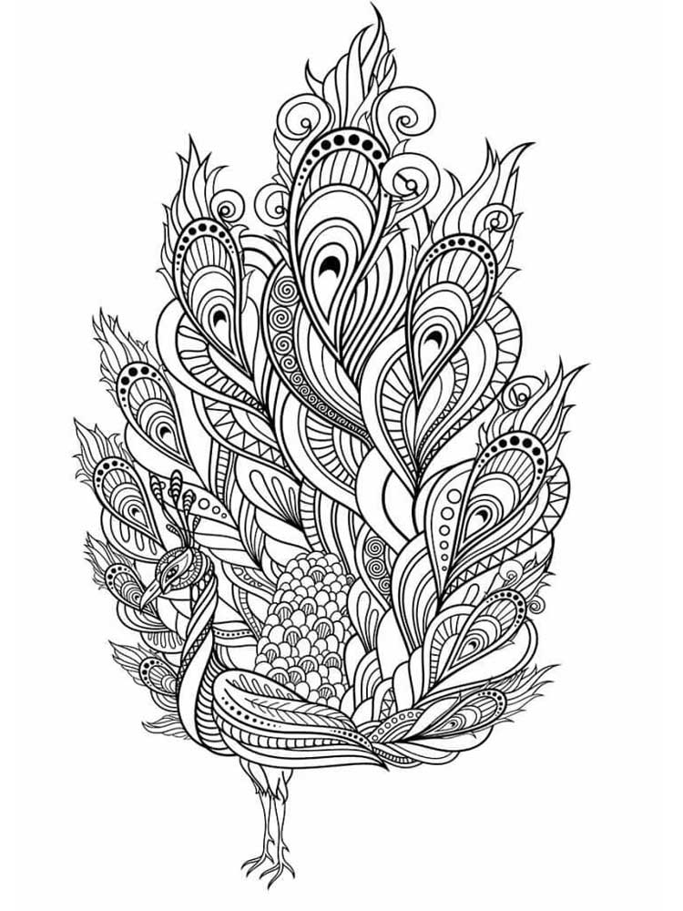 peacock coloring pages for adults free peacock coloring pages for adults printable to coloring adults peacock pages for
