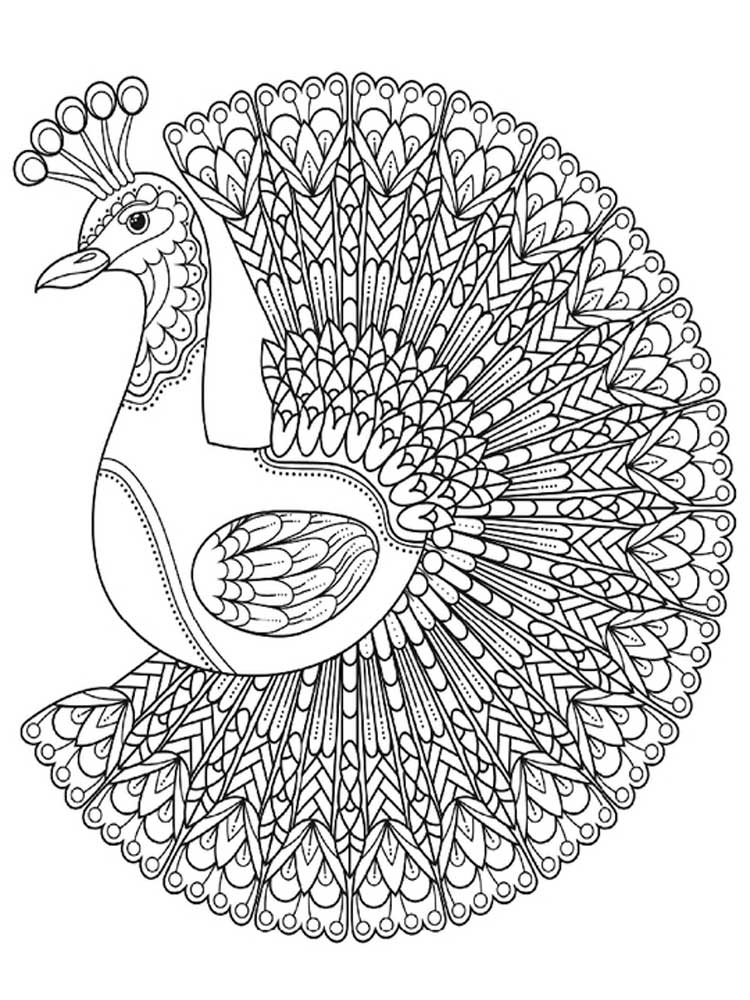 peacock coloring pages for adults free peacock coloring pages for adults printable to peacock coloring for adults pages