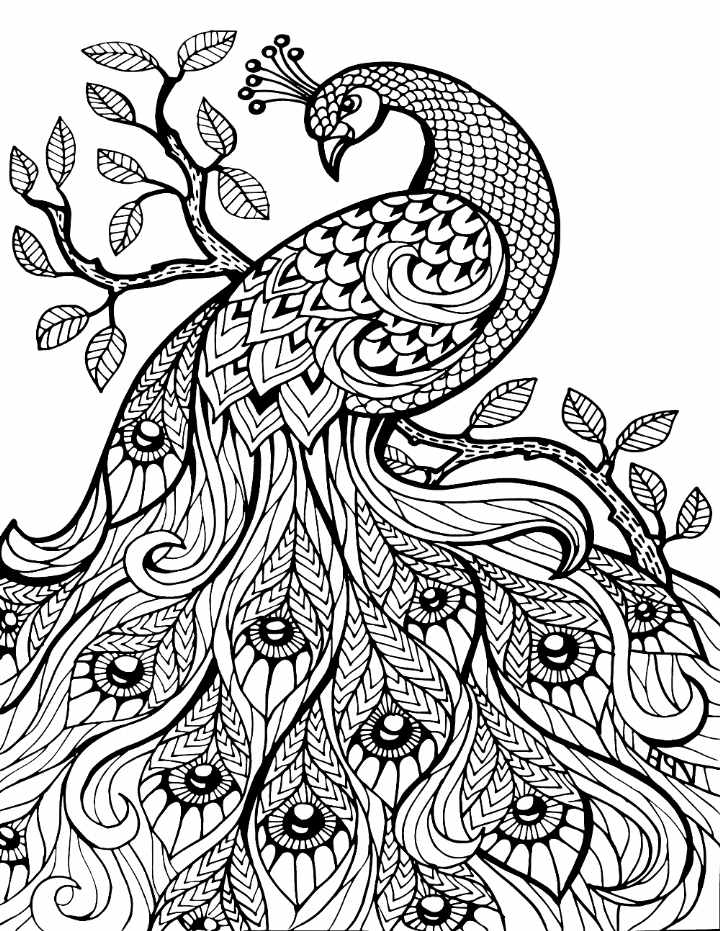 peacock coloring pages for adults peacock coloring pages for adults coloring home coloring pages adults for peacock