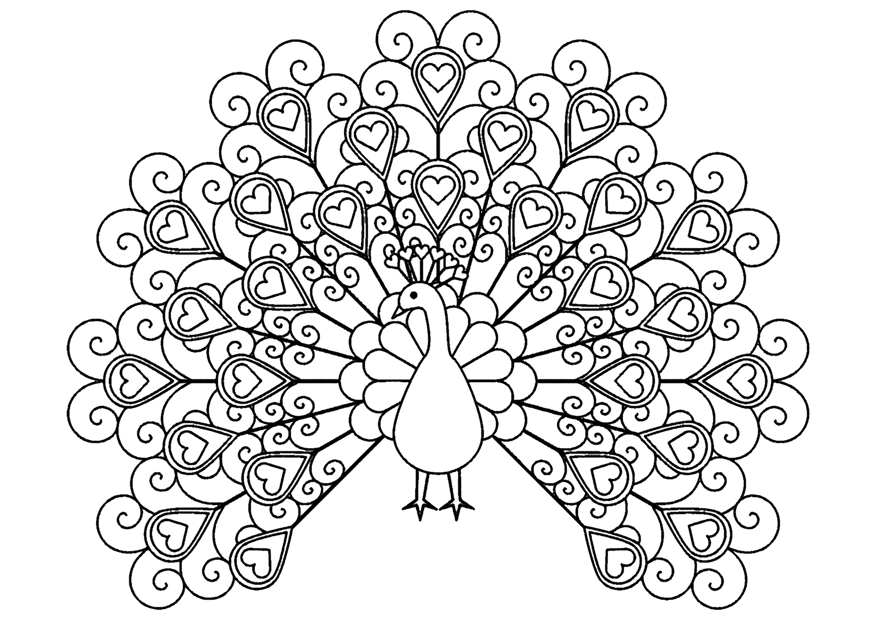 peacock coloring pages for adults peacock with hearts peacocks adult coloring pages coloring pages peacock adults for
