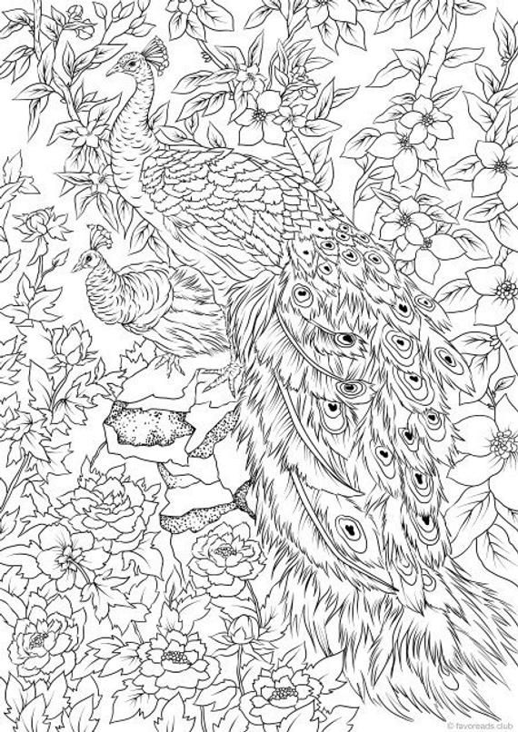 peacock coloring pages for adults peacocks printable adult coloring page from favoreads coloring peacock for adults pages