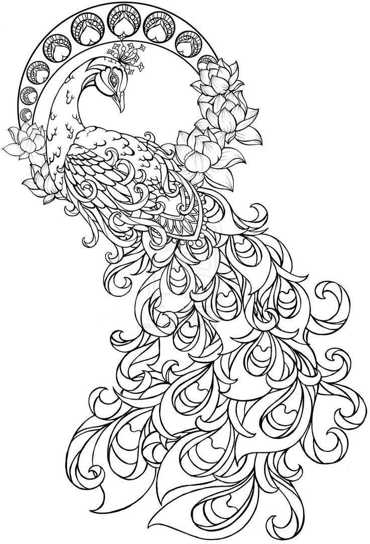 peacock coloring pages for adults pin on henna inspriation peacock adults coloring for pages