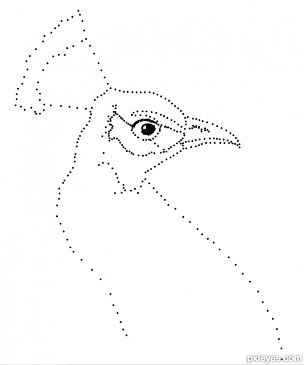 peacock step by step drawing guide the making of peacock dots pxleyescom step by peacock step
