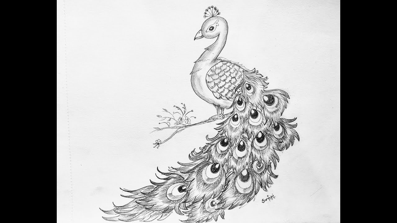 peacock step by step peacock drawing step by step for beginners how to draw a step step by peacock
