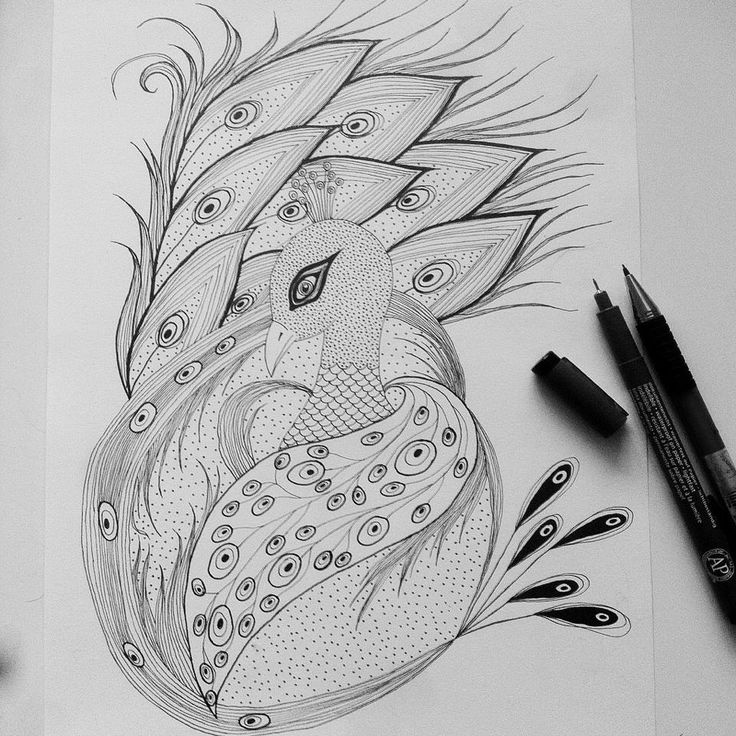 peacok drawing peacock black and white drawing at paintingvalleycom peacok drawing