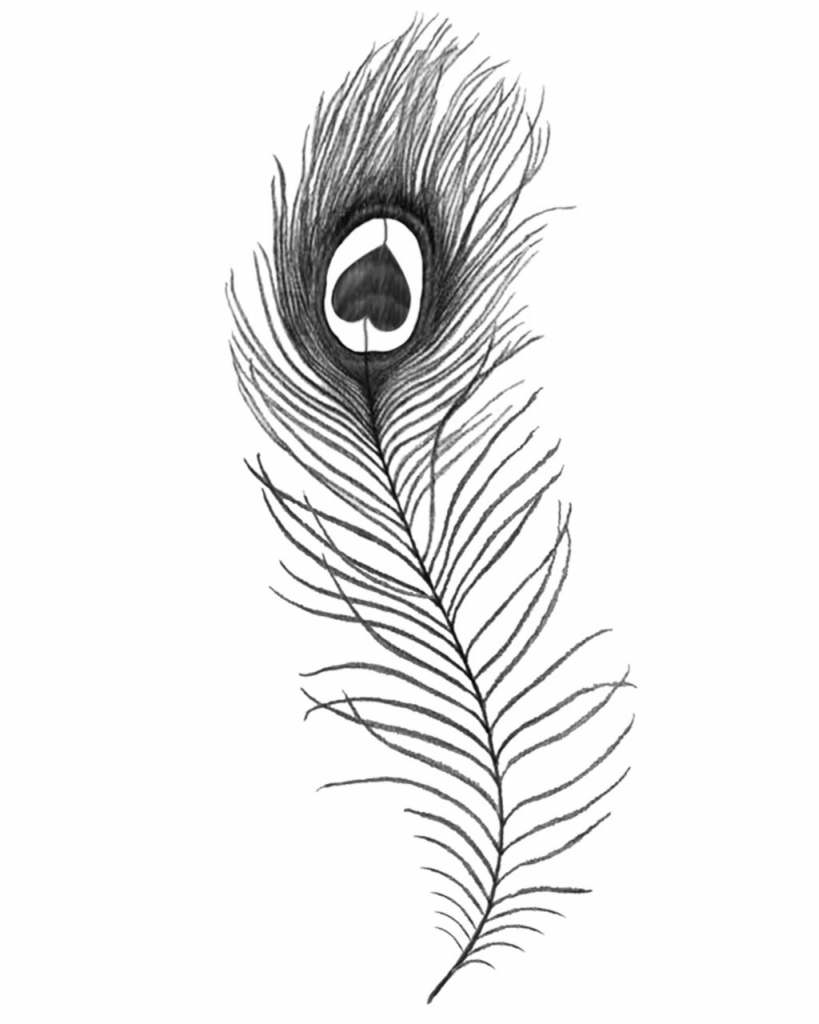 peacok drawing the peacock of pencilness by aboredlifeisboring on drawing peacok