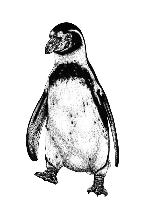 penguin drawing funny penguin clip art drawing penguin