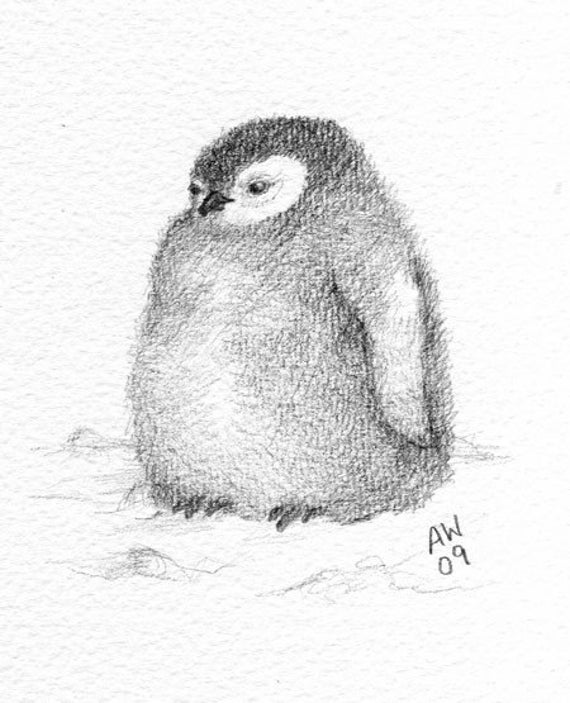 penguin drawing how to draw a baby penguin step by step cartoon animals drawing penguin
