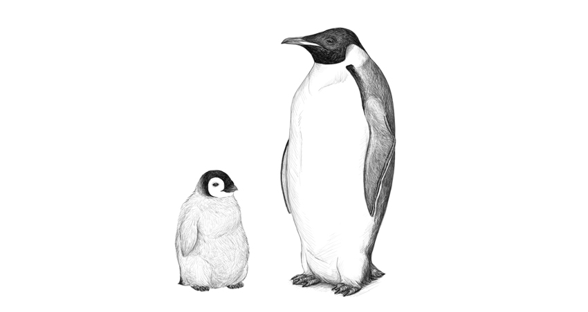 penguin drawing king penguin drawing at getdrawings free download penguin drawing