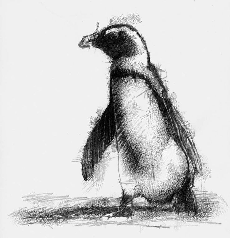 penguin drawing penguin art drawings charcoal art animal drawings drawing penguin