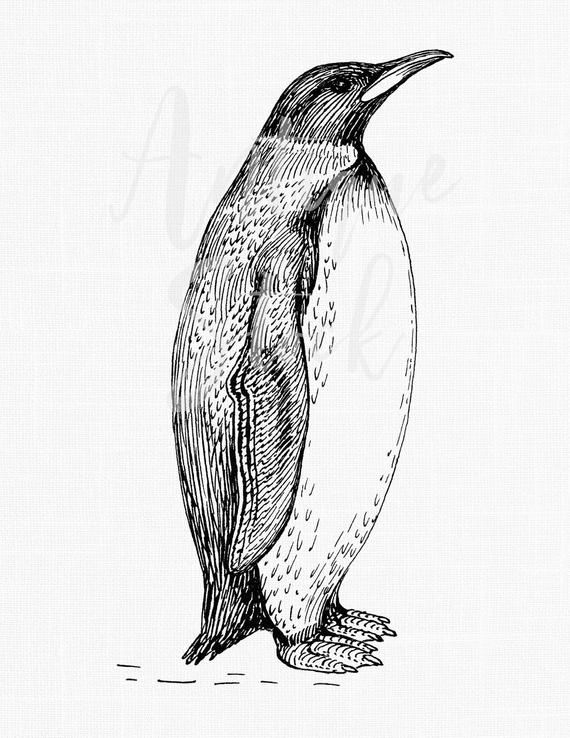 penguin drawing penguin clipart digital download line drawing illustration drawing penguin