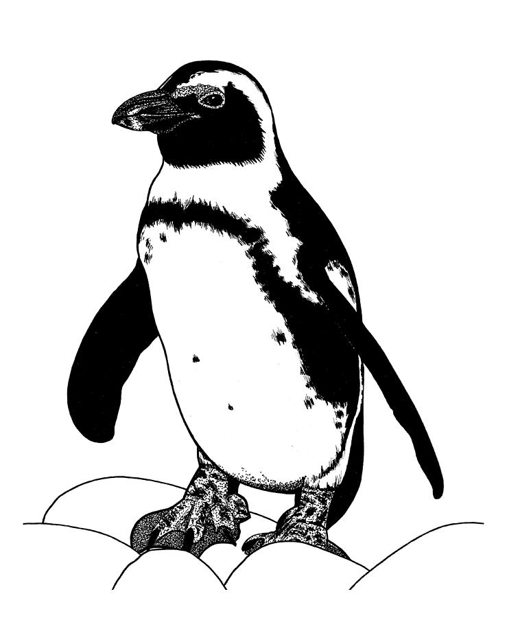penguin drawing penguin drawing step by step art starts drawing penguin