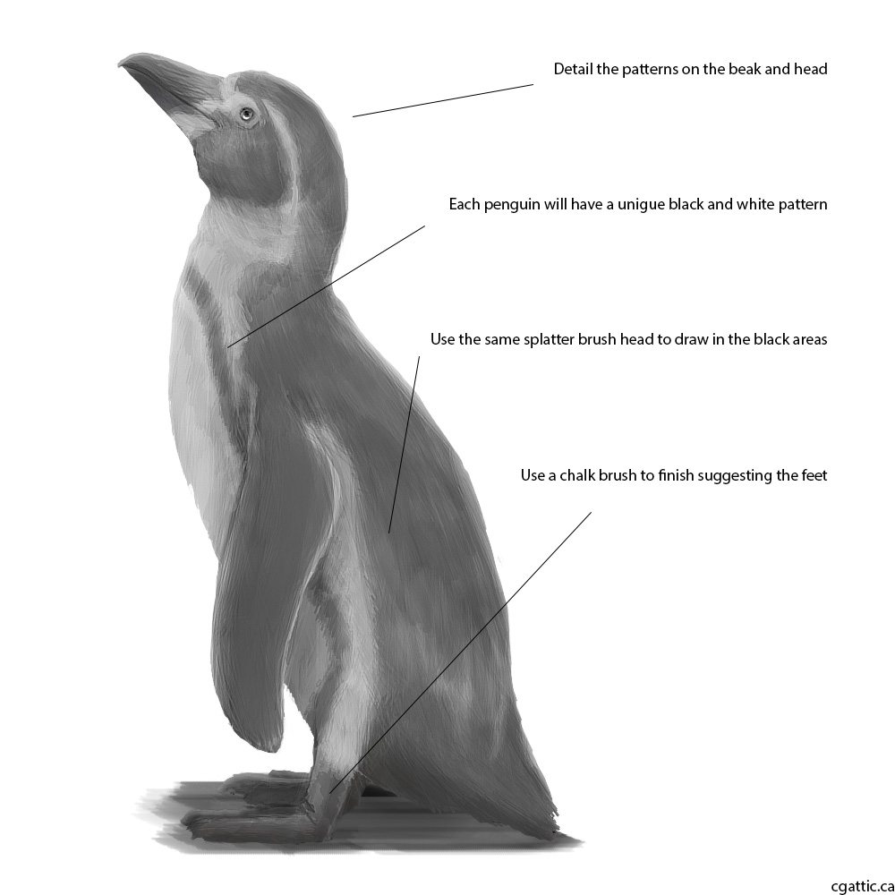 penguin drawing realistic penguin drawing in 4 steps with photoshop penguin drawing