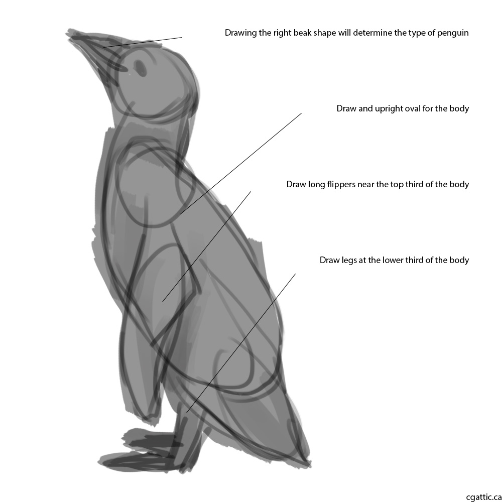 penguin drawing realistic penguin drawing in 4 steps with photoshop penguin drawing 1 1