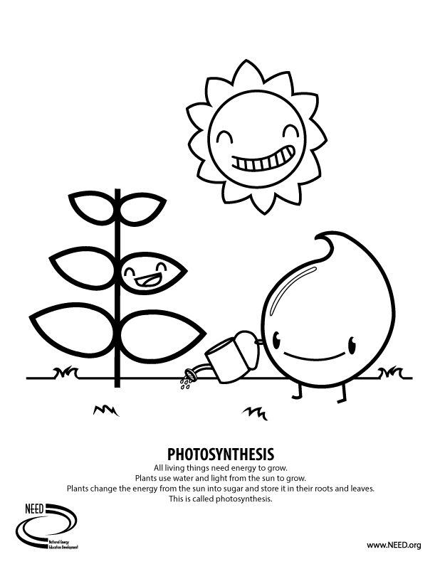 photosynthesis coloring worksheet image result for photosynthesis worksheet elementary coloring worksheet photosynthesis