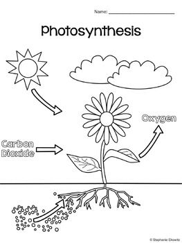 photosynthesis coloring worksheet photosynthesis diagram worksheet have fun teaching worksheet photosynthesis coloring