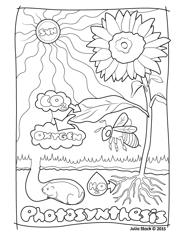 photosynthesis coloring worksheet photosynthesis worksheets homeschooldressagecom photosynthesis worksheet coloring