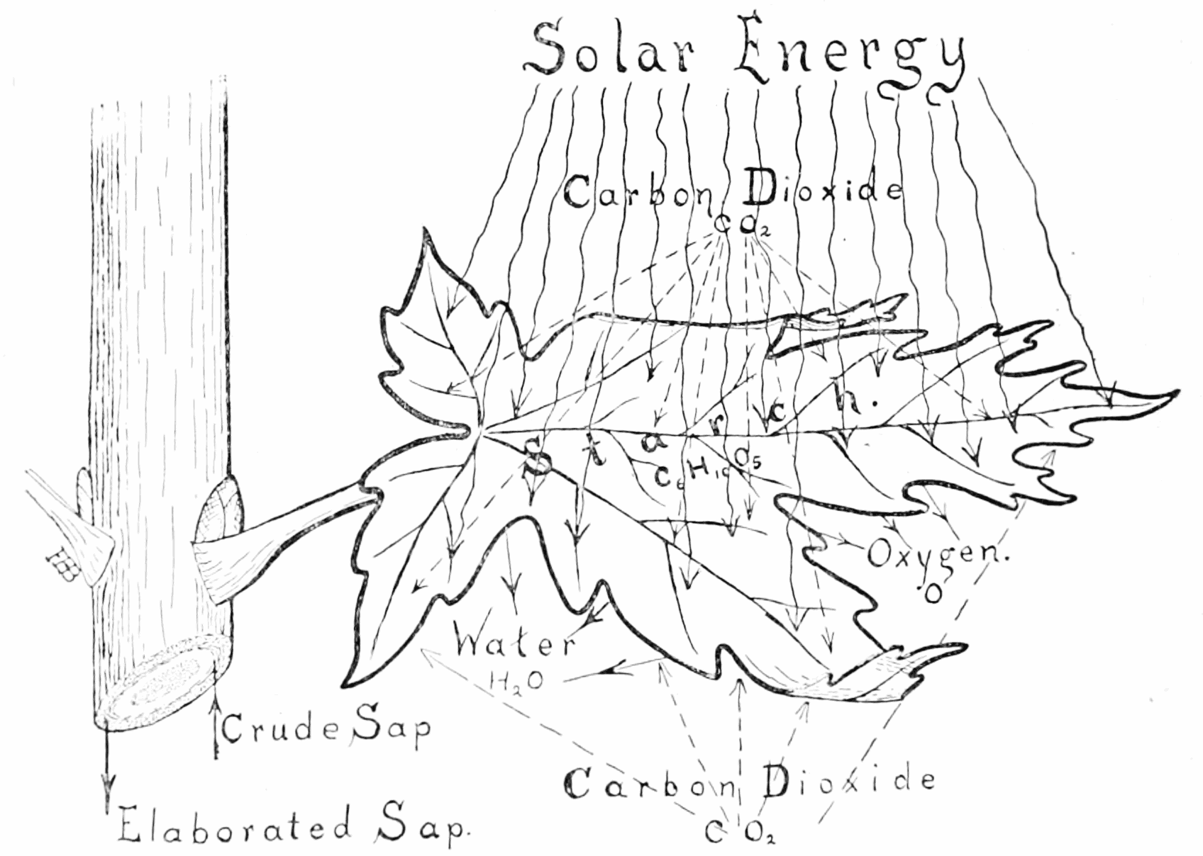 photosynthesis coloring worksheet solar materials the need project photosynthesis coloring worksheet