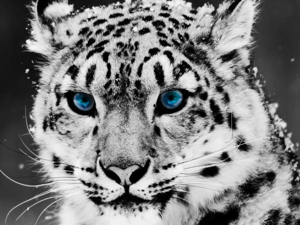 picture of a cheetah download free cheetah wallpaper for phone pixelstalknet of picture a cheetah