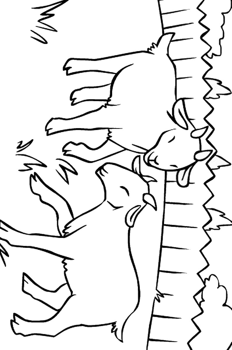 picture of a goat to color 19 animal goats printable coloring sheet a goat color of picture to