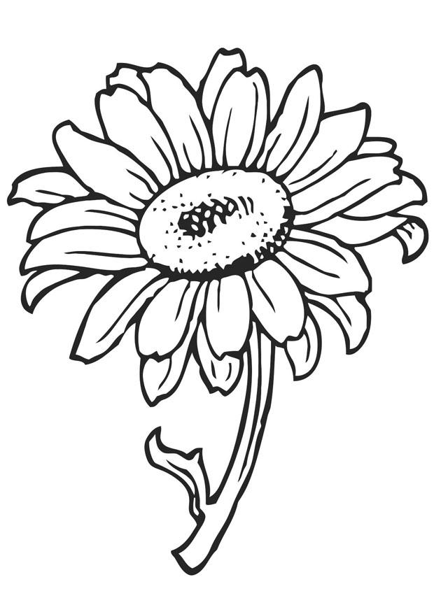 picture of flowers to colour free printable flower coloring pages for kids best flowers colour to picture of