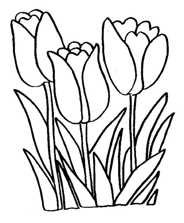 picture of flowers to print flower swag flower coloring pages flowers to picture print of