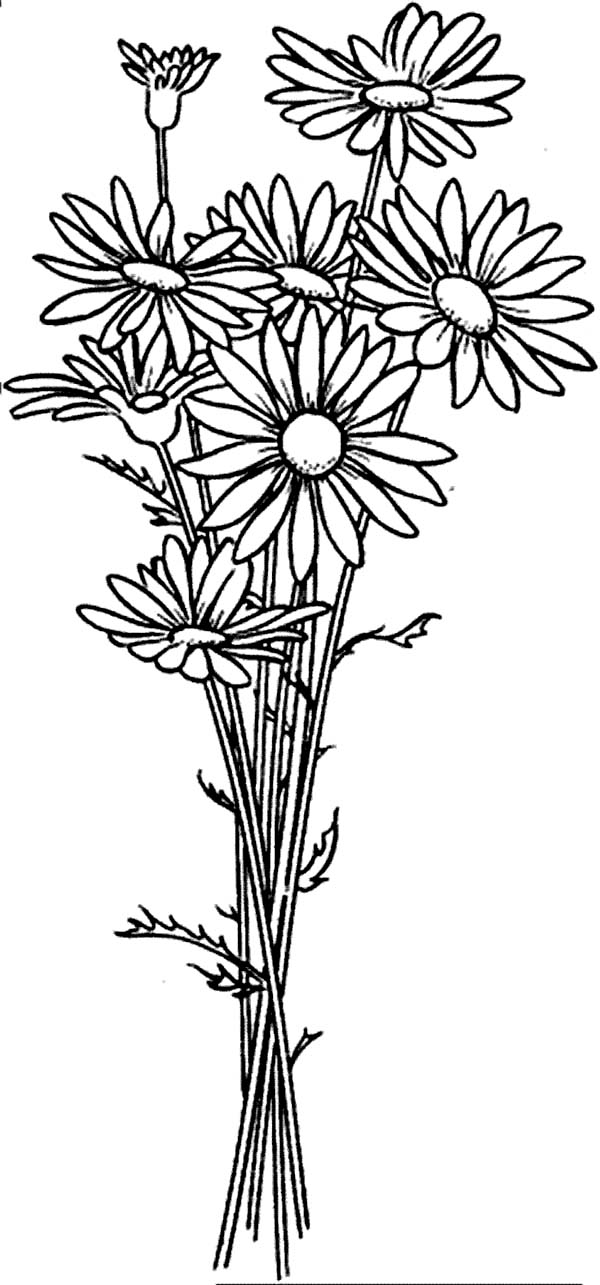 picture of flowers to print tulip flower coloring page download print online flowers to of picture print