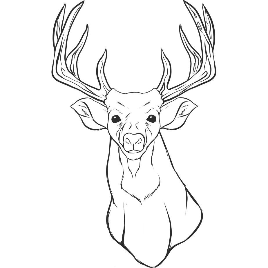 pictures of deers to color deer coloring pages free download on clipartmag pictures of deers to color