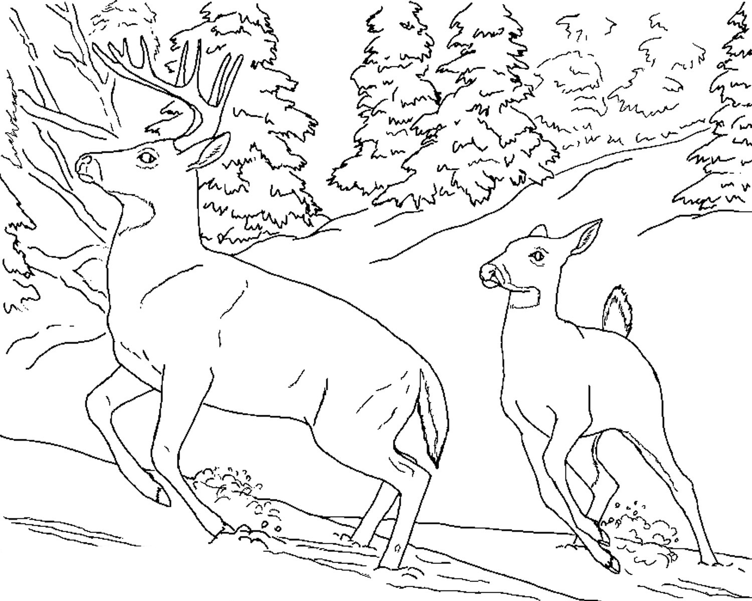 pictures of deers to color free deer coloring pages deers pictures color of to