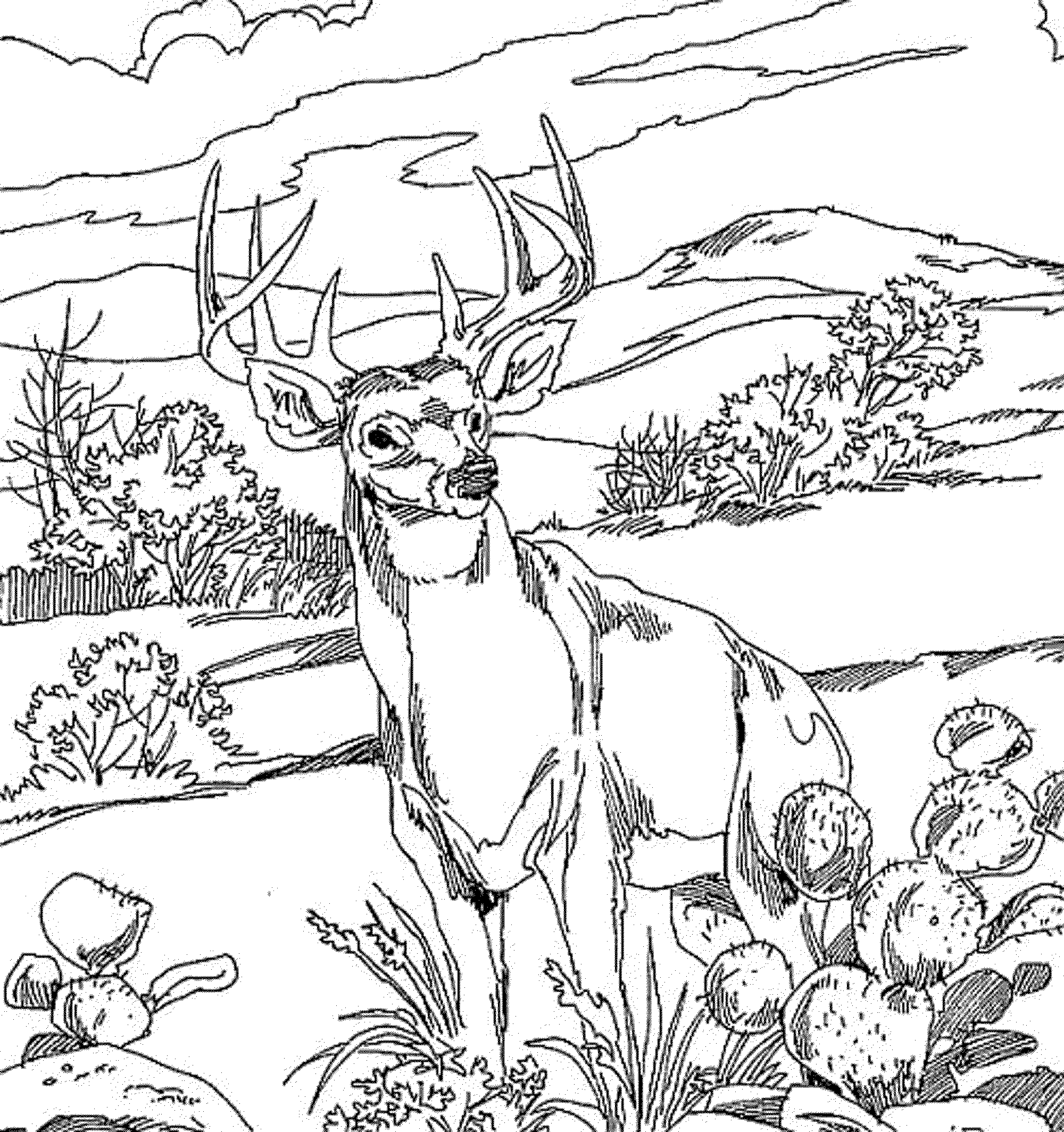 pictures of deers to color free printable deer coloring pages for kids deers pictures of color to