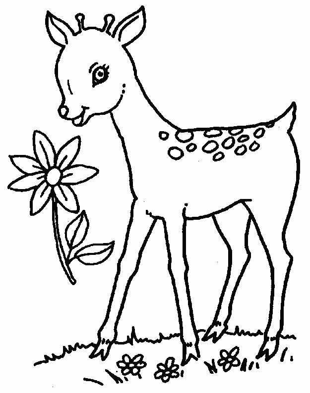 pictures of deers to color free printable deer coloring pages for kids deers pictures of to color