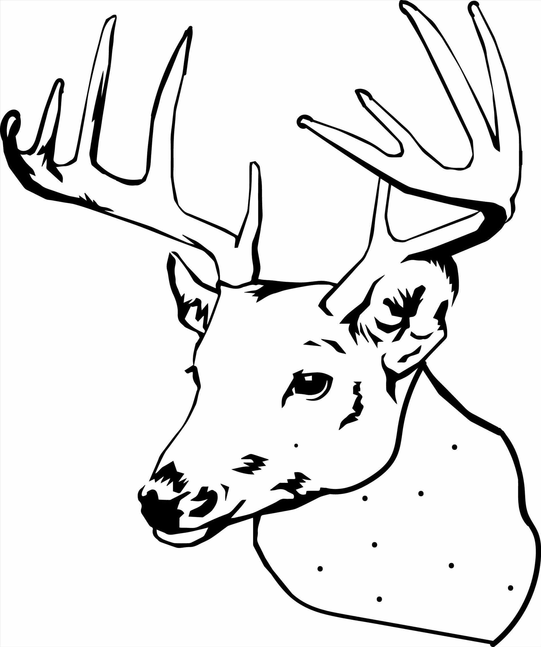 pictures of deers to color free printable deer coloring pages for kids pictures color deers to of