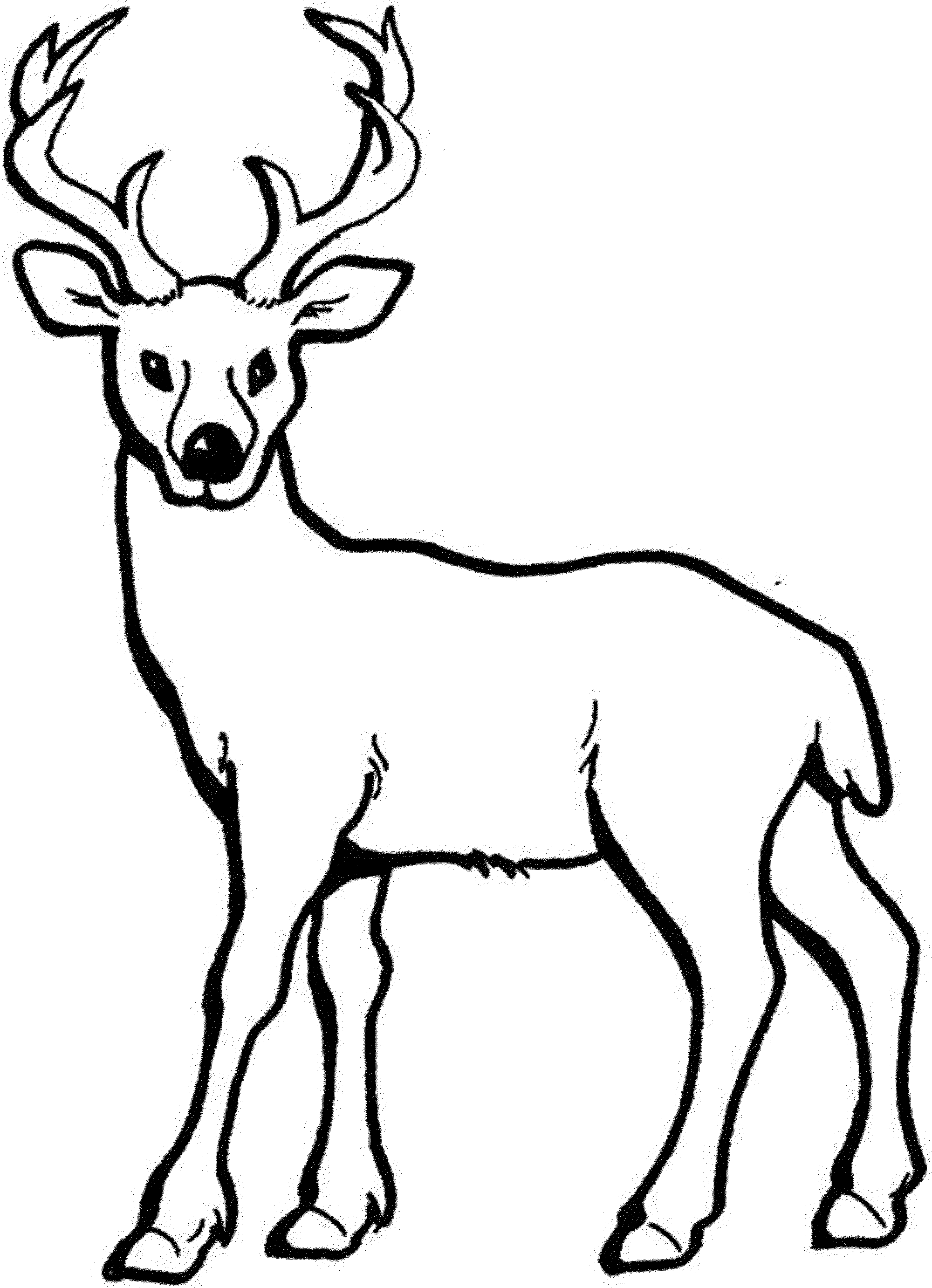 pictures of deers to color mule deer coloring page free printable coloring pages of to pictures deers color