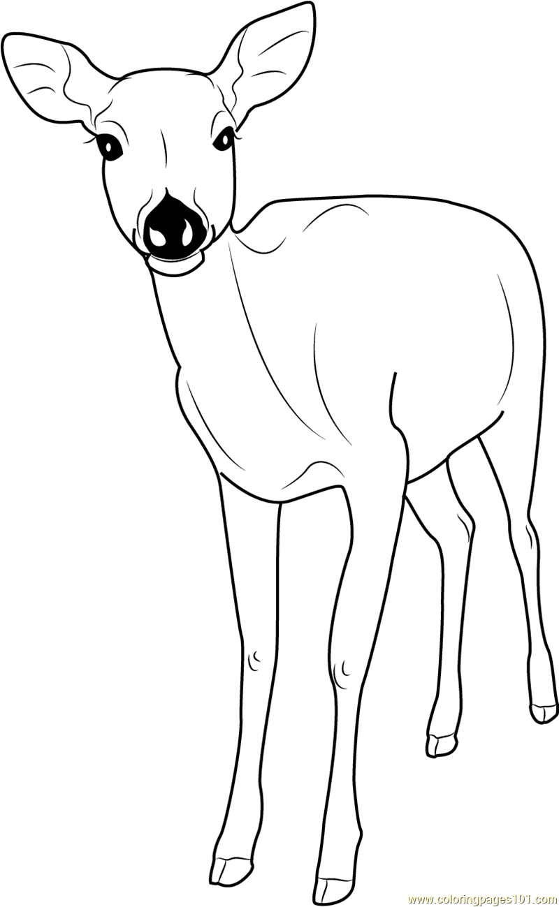 pictures of deers to color pictures of deers to color deers color of to pictures