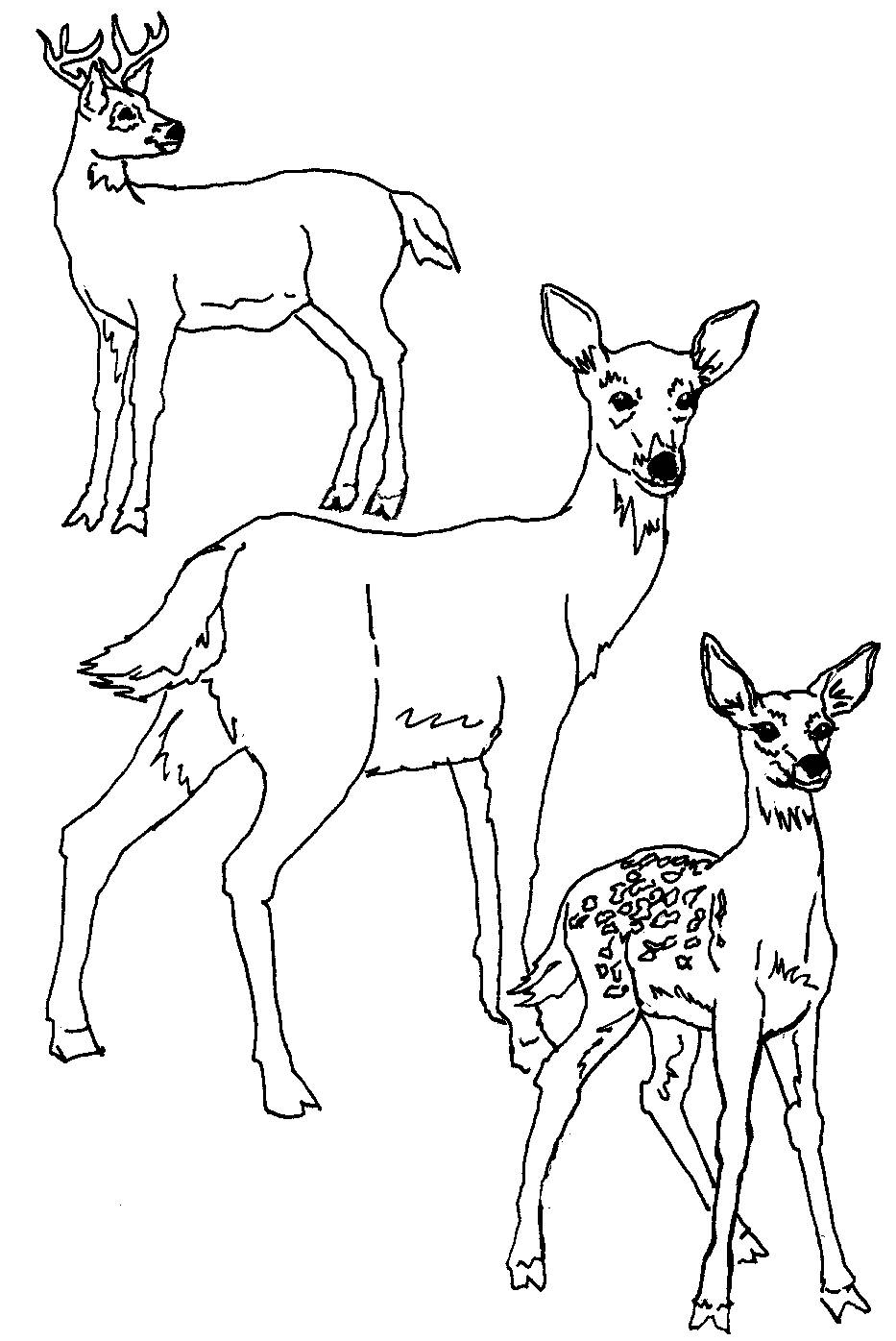 pictures of deers to color print download deer coloring pages for totally color of pictures to deers