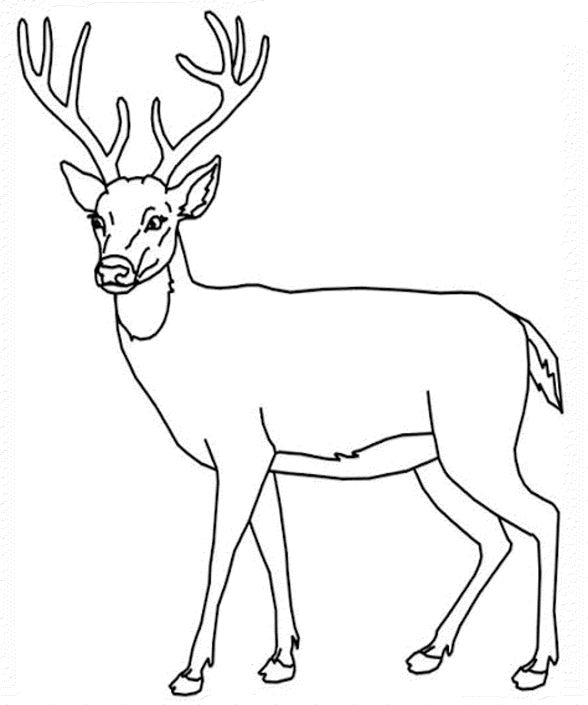 pictures of deers to color print download deer coloring pages for totally pictures color to deers of